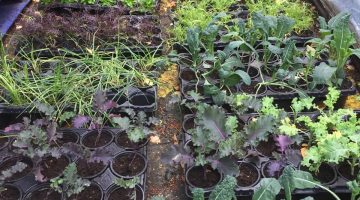 Edible Winter Crops from Cultivate