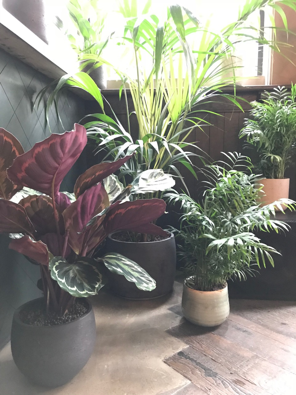 photo of foliage plants fountain and ink waterloo bar indoor plants garden