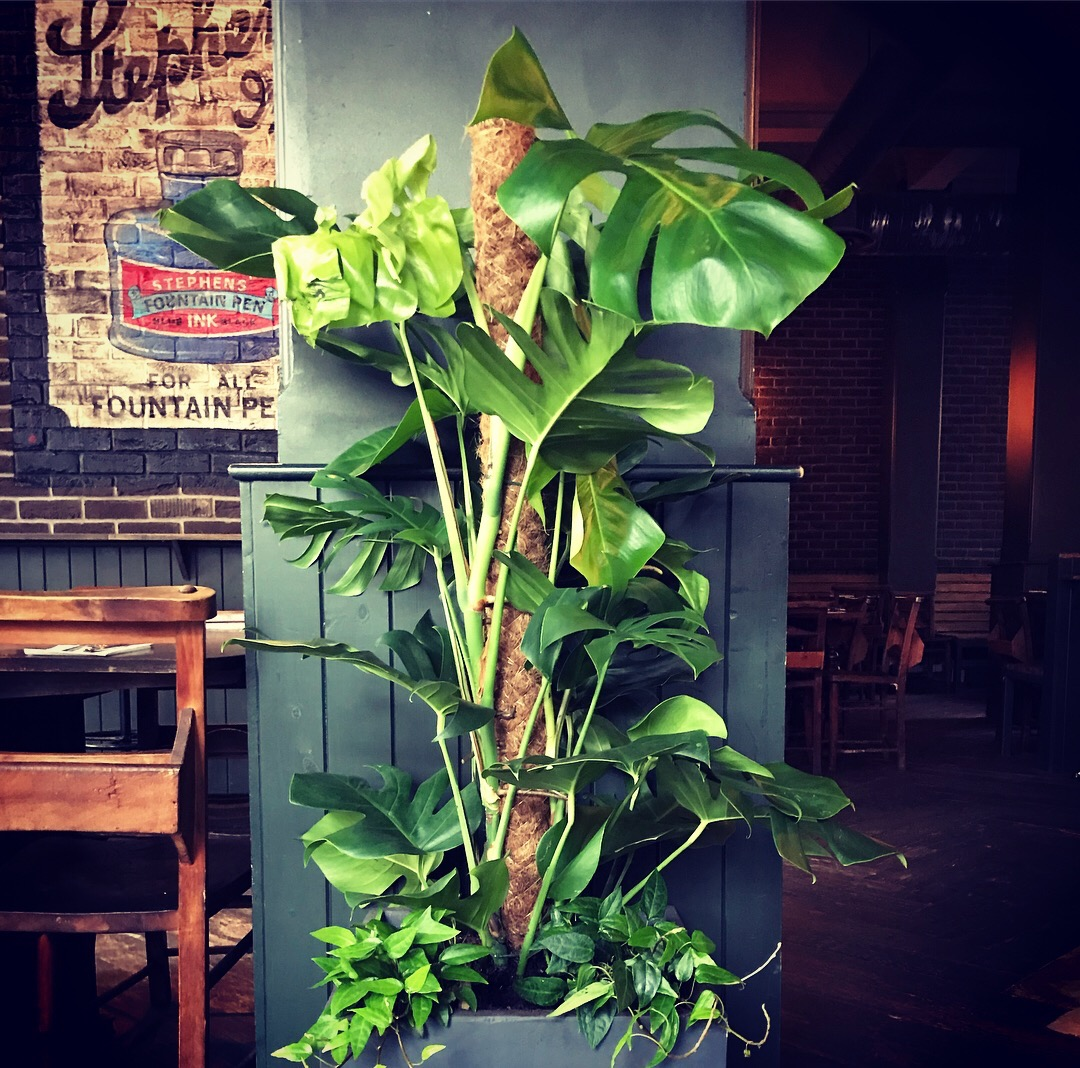 monstera indoors garden plants fountain and ink barworks london southbank southwark