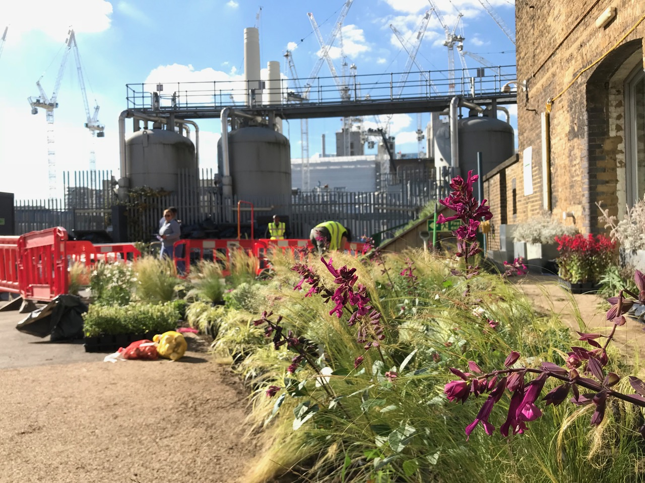 battersea power station planting phase 3 robert mcalpine