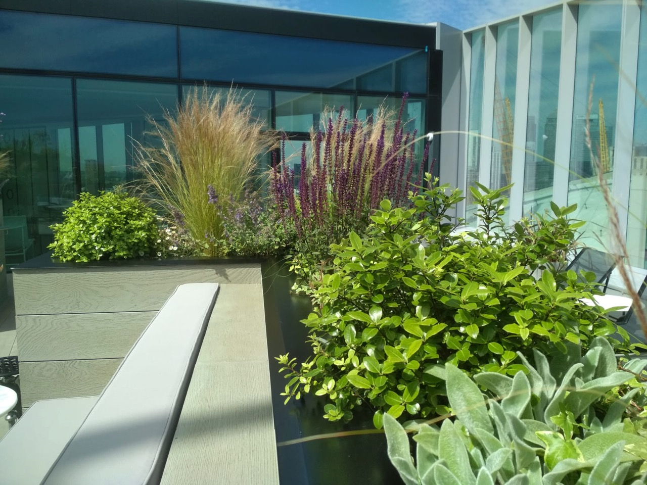 plants on roof terrace greenwich stipa pittosporum salvia stachys